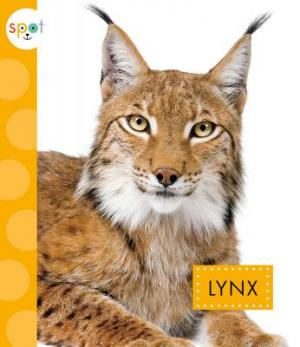 Lynx book cover, Spot Wild Cats series