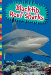 Blacktip Reef Sharks