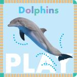 Dolphins Play