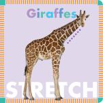 Giraffes Stretch